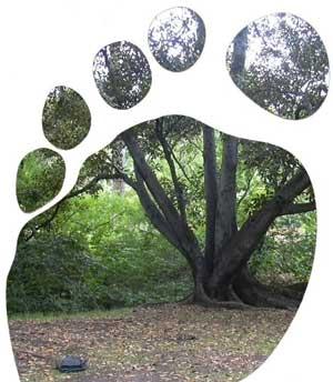 http://www.zmescience.com/wp-content/uploads/2007/11/eco-footprint-image_sm.jpg