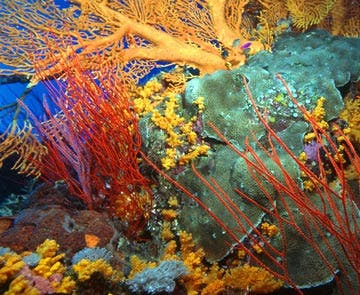 http://www.zmescience.com/wp-content/uploads/2008/03/coral.jpg