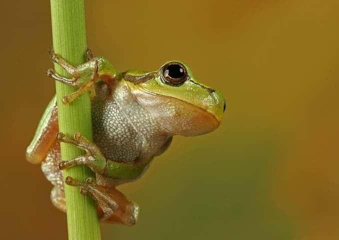 [http://www.zmescience.com/wp-content/uploads/2011/11/cute_frog.jpg]