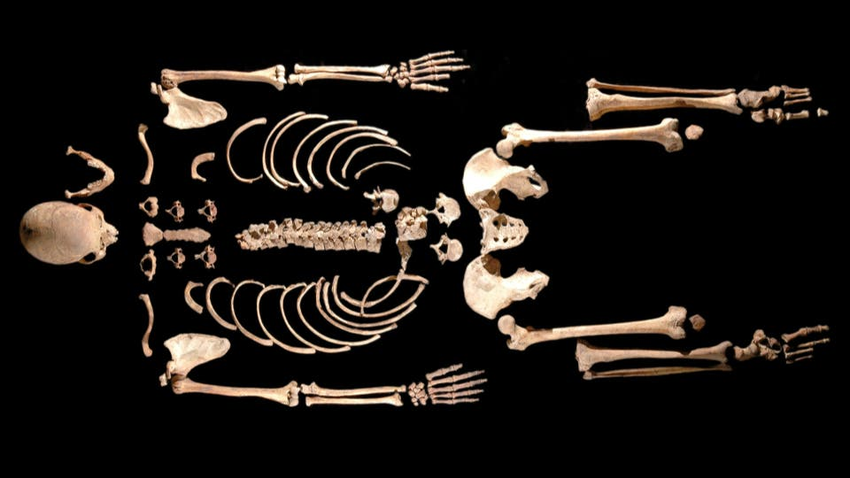 The skeleton of an ancient caveman dubbed Brana 1 yielded the oldest DNA found in a modern human. CREDIT: Alberto Tapia