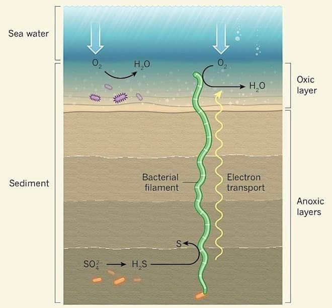 Bacteria Schematic