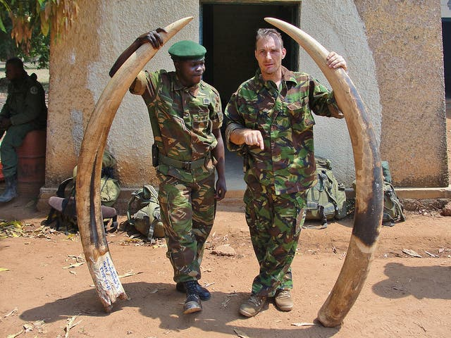 Elephant ivory seized from poachers in Garamba. Credit: Flickr Enough Project