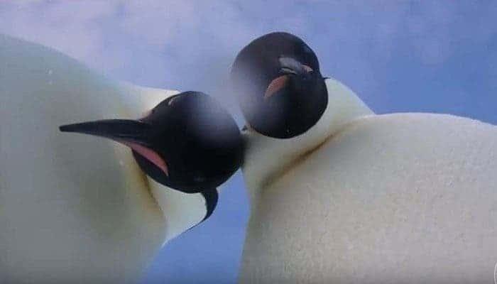 Penguin selfie.