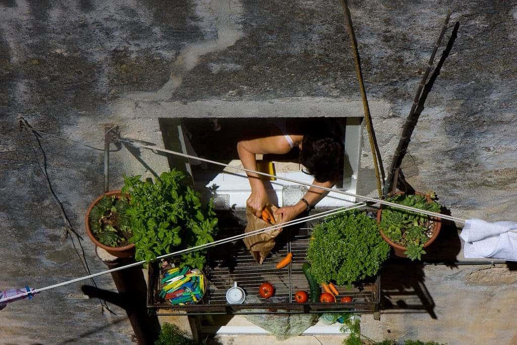 Vegetable balcony.