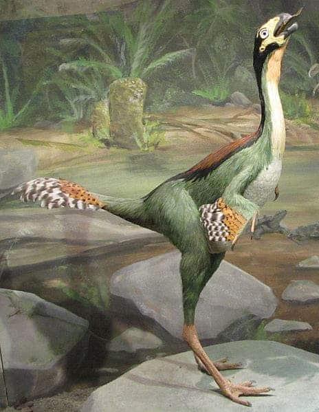 Caudipteryx Hendrickx.