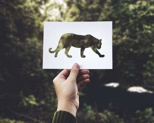 Paper leopard.